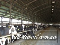 Agrotour in Ukraine (dairy farms)